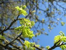 Møn im Frühling 034