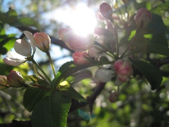 Møn im Frühling 069