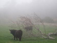 Møn Mandemarke im Nebel Herbst 2014 1