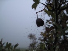 Møn Mandemarke im Nebel Herbst 2014 2