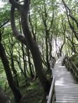 Treppe zum Strand Kreidefelsen Møn