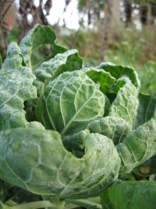 Møn SommerGemüse
