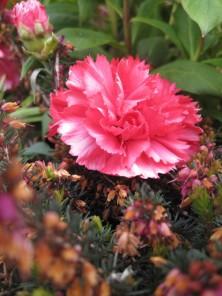 Møn Bakkegaard Spätsommerblumen