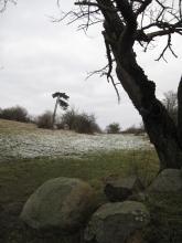 Møn Høvblege im Schnee 071