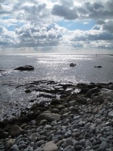 Strand Møns Fyr - Busene Have 049