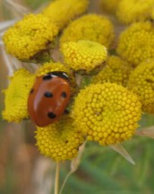 Carmen Wedeland Insekt 02