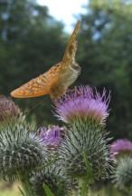 Carmen Wedeland Insekt 04