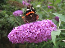 Carmen Wedeland Insekt 10