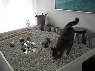 Katze Livlig fand alles gut ...