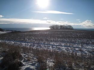 Østmøn i sne 603