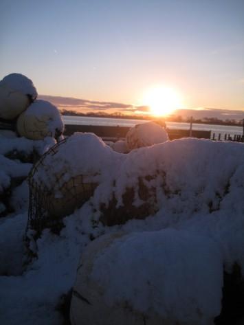 Møn Hårbølle havn i sne 076
