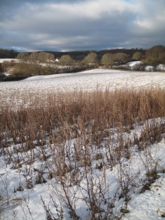 Møn Karensby Rund ums Feld in Busene 017
