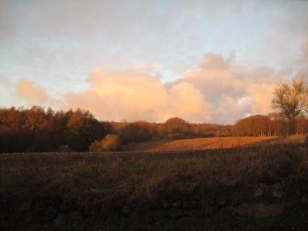 Møn Klinteskoven udsigt fra Bakkegaard