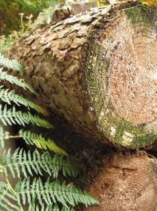 Møn Klinteskoven