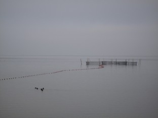 Sydsjælland Balle Strand og Kalvehave Strand 037