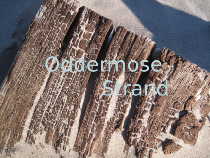 Oddermose Strand 01 168