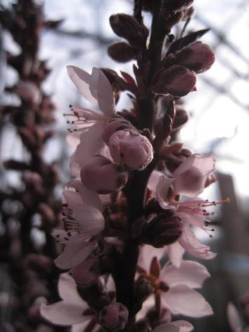 flemmings-planteskole-ugledige-039