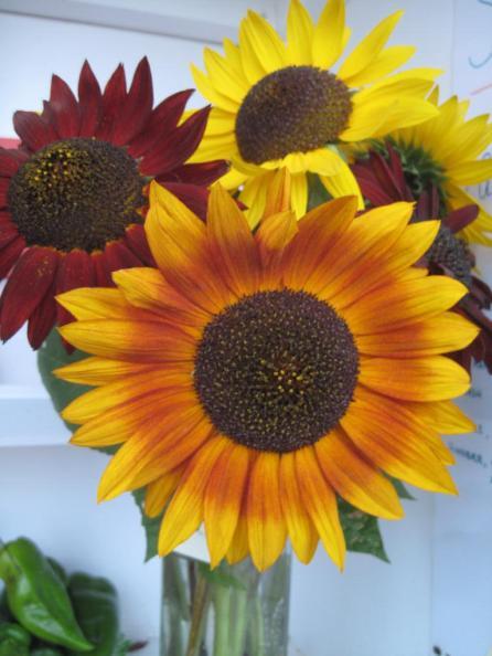 herbst-mon-ernte-sonnenblumenstrauss
