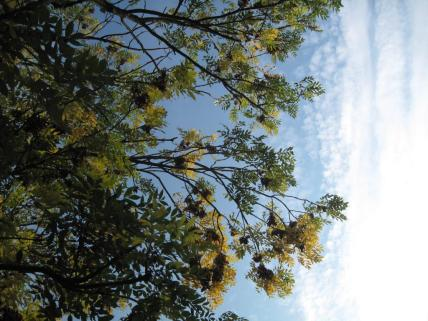 mon-herbstbaum-am-stengardsvej