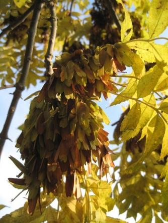 mon-herbstbaum-busenevej-stengardsvej