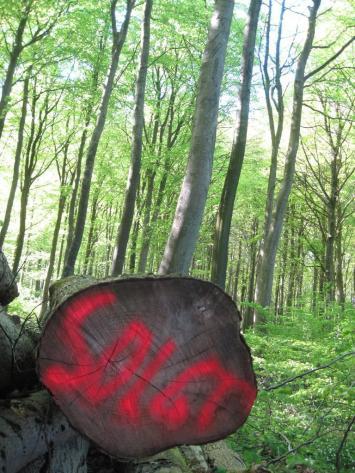mon-klinteskoven-karensby-campingplads-104