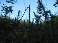 mon-klinteskoven-karensby-campingplads-126