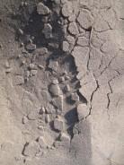 mon-sand-am-strand-bei-klintholm-havn-vest-126