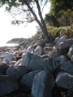 mon-strand-bei-fanefjord-mit-steinen-und-baum