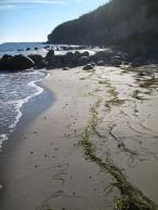 mon-strand-bei-fanefjord-mit-steinen-und-tang