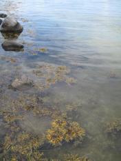 mon-unterwasserwelt-bei-camping-monbroen