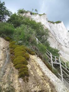 mons-klint-kreidefelsen-von-graryg-fald-her-zur-treppe-am-geocenter-268