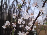 sjaelland-flemmings-planteskole-ugledige-033