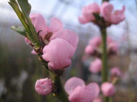 sjaelland-flemmings-planteskole-ugledige-042