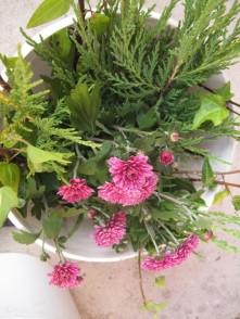 Strohblumen und diverses Immergrün