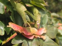 mon-herbst-winter-2016-17-018