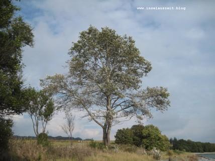 mon-herbst-winter-2016-17-043