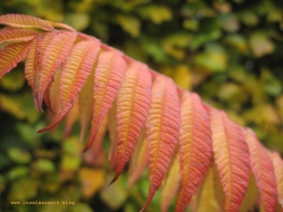 mon-herbst-winter-2016-17-127