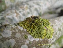 mon-herbst-winter-2016-17-139