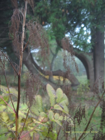 mon-herbst-winter-2016-17-bakkegaard-nebelgarten-036