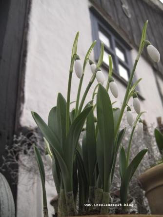mon-herbst-winter-2016-17-busene-31-01-17-2