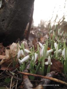 mon-herbst-winter-2016-17-fruehjahrsboten-rund-um-bakkegaard-055
