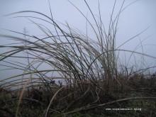 mon-herbst-winter-2016-17-gras