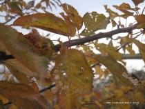 mon-herbst-winter-2016-17-jordbassinerne-156
