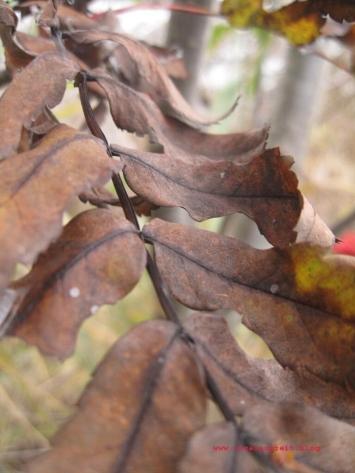 mon-herbst-winter-2016-17-jordbassinerne-171