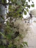 mon-herbst-winter-2016-17-jordbassinerne-207