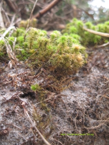 mon-herbst-winter-2016-17-moos-054