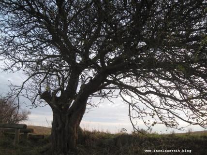 mon-herbst-winter-2016-17-rund-ums-feld-nordoestlich-von-bakkegaard-029