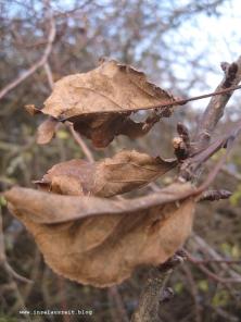 mon-herbst-winter-2016-17-rund-ums-feld-nordoestlich-von-bakkegaard-038