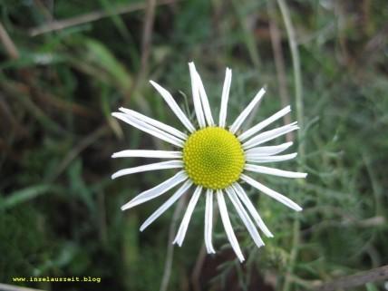 mon-herbst-winter-2016-17-rund-ums-feld-nordoestlich-von-bakkegaard-093