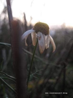 mon-herbst-winter-2016-17-rund-ums-feld-nordoestlich-von-bakkegaard-099
